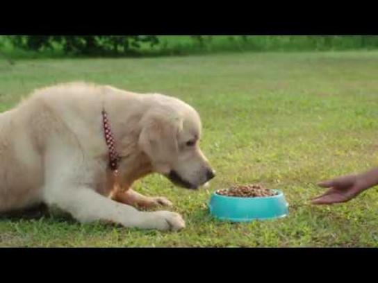 Reliance General Insurance Digital Ad - The Running Dog