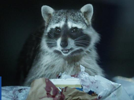 Geico Film Ad - Raccoons