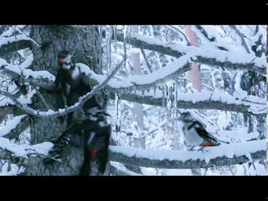 Latvian States Forests Film Ad -  We support Latvian sport!