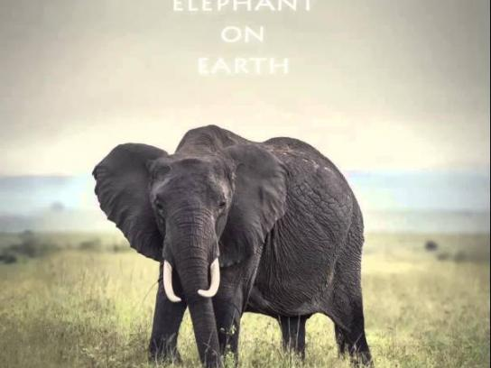 Born Free Foundation Outdoor Ad -  Elephant