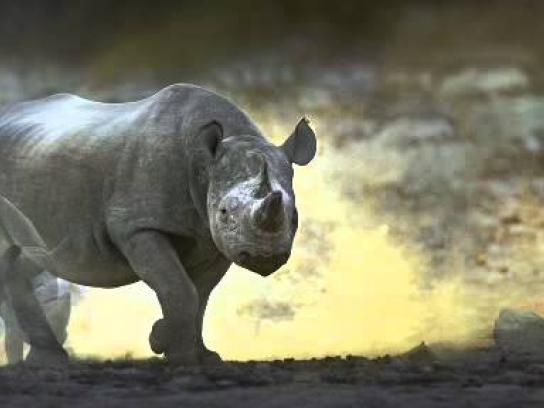 Born Free Foundation Outdoor Ad -  Rhino