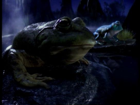 Bud Light Film Ad - Bud Light Frogs #BudLightBeer
