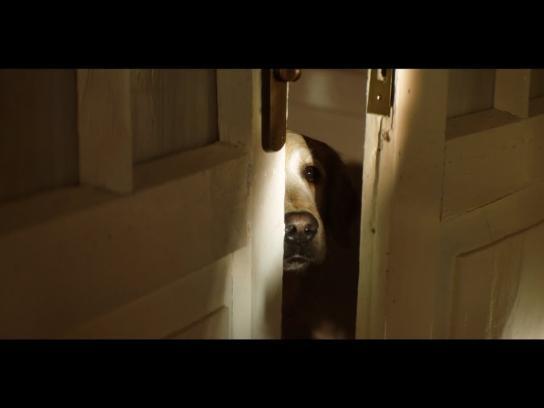 30 Millions d'Amis Foundation Film Ad - 2018 Pet Campaign