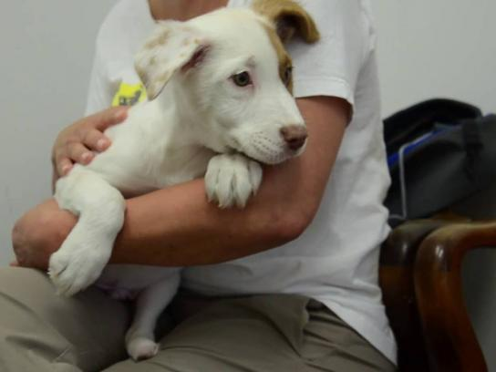 Merrick Pet Care Digital Ad - Baby Joey