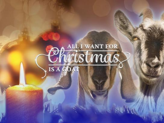 ActionAid Digital Ad -  All I want for Christmas is a Goat