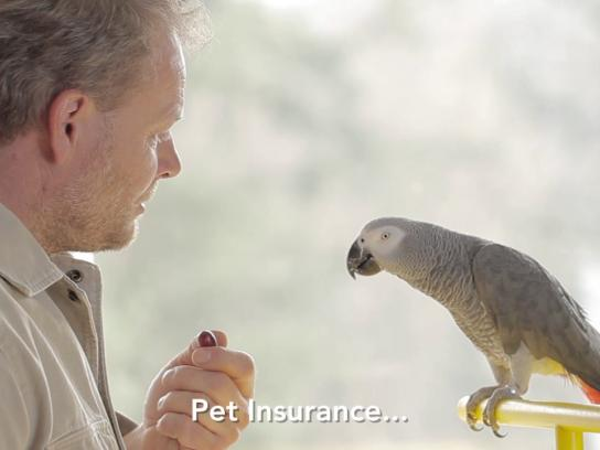 Ceska Pojistovna Experiential Ad - Parrot