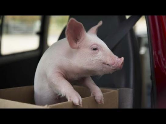 Vodafone Film Ad -  Piggy Sue