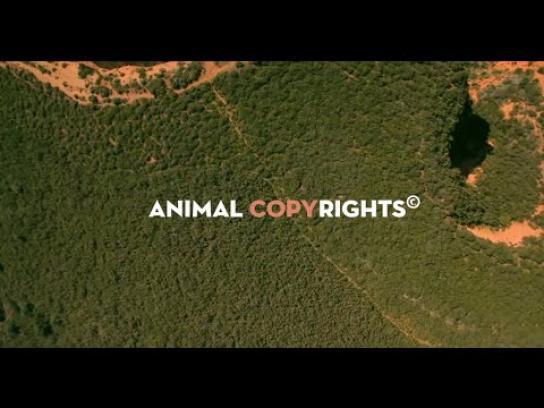 WWF Digital Ad -  Animal copyrights