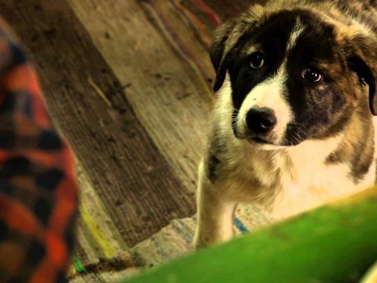 Anim'est Film Ad -  Two Shepherds
