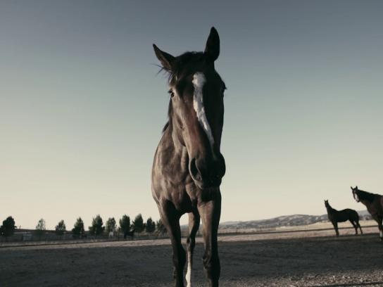 Purina Film Ad - This Old Horse