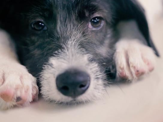 Quatro Patinhas Ambient Ad -  Priceless pets