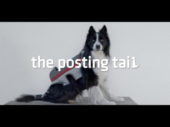 Pedigree Digital Ad -  The posting tail