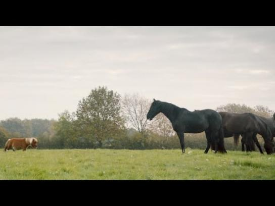 Amazon Film Ad -  Lonely Little Horse