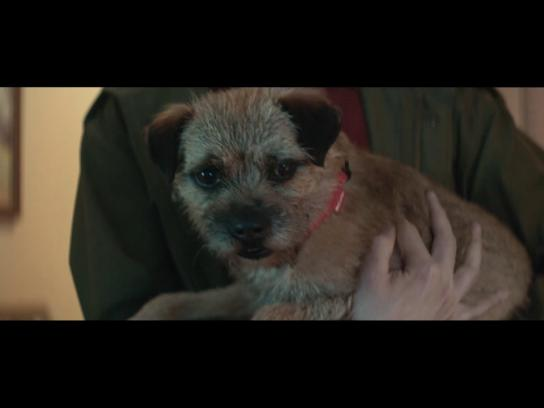 30 Millions d'Amis Foundation Film Ad - 2017 Pet Campaign