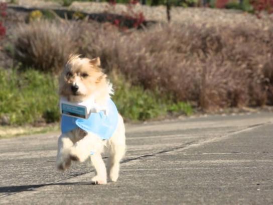 Bupa Ambient Ad -  Bupa Sun Rescue Dogs