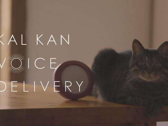 Kal Kan Content Ad - Do cats recognize their owner's voice even after a long absence?