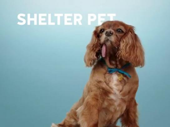 Humane Society of United States Film Ad -  The Shelter Pet Project - Anthem
