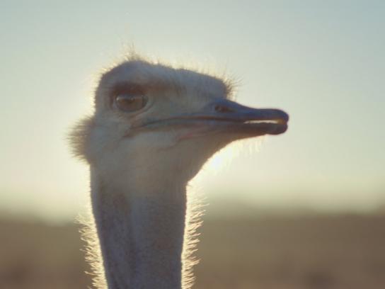 Samsung Film Ad - Ostrich