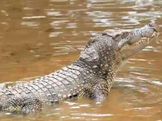Land Rover Film Ad -  Non-Genuine Animals - Croc