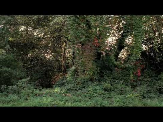 Rodenstock Film Ad -  Snout Beetle