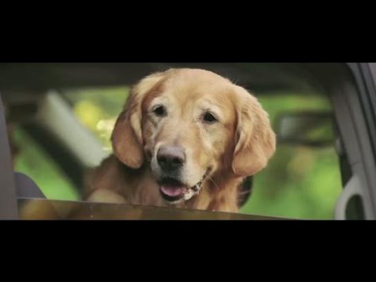 Toronto Humane Society Film Ad -  Puppy swap