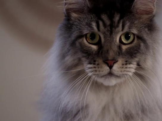 PetSafe Film Ad - Catspiracy