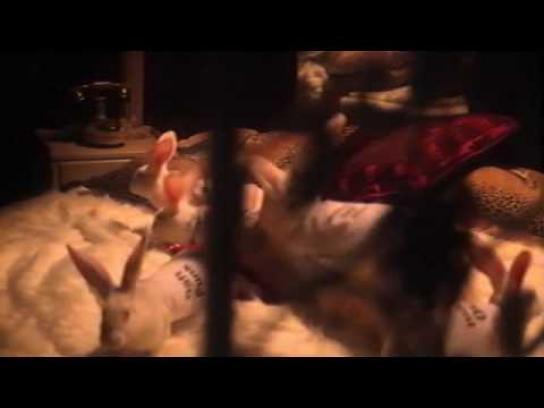 MTV Film Ad -  The breeding farm