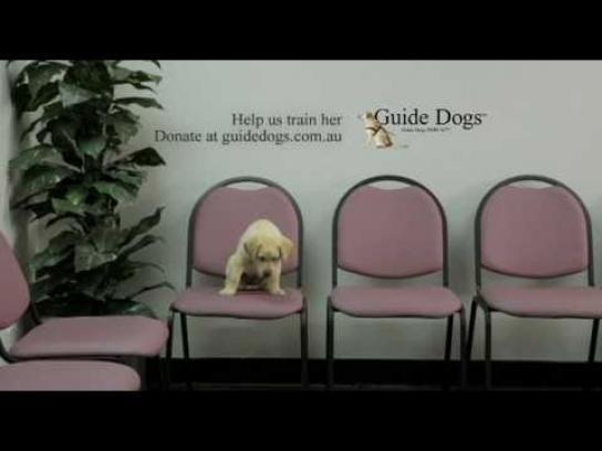 Guide Dogs Australia Film Ad -  Interviews