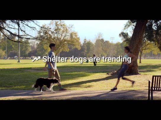 Dallas Pets Alive Digital Ad -  Adoptable trends