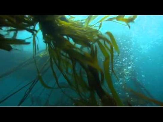 Conservation International Film Ad -  Ocean