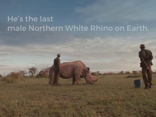 Ol Pejeta Conservancy Digital Ad - The World's Most Eligible Bachelor