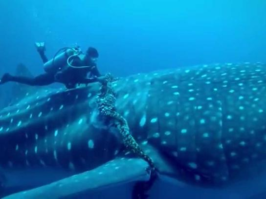 Dignity Health Digital Ad - Whale Shark Rescue