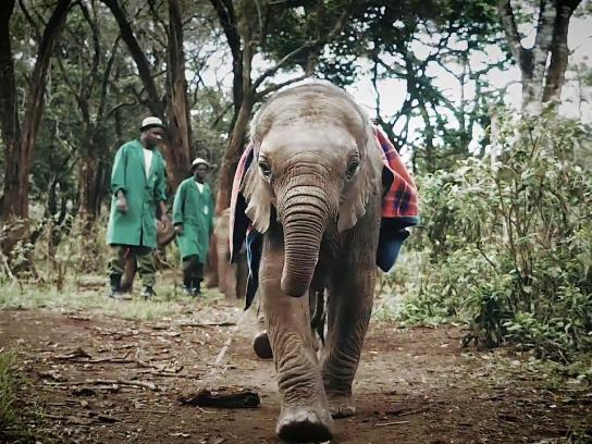 David Sheldrick Wildlife Trust Digital Ad - Hello in Elephant