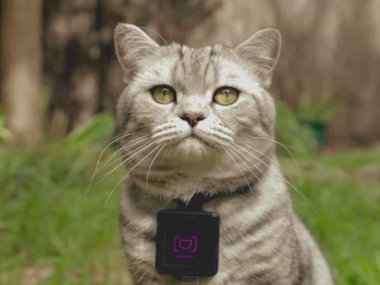 Whiskas Digital Ad -  Catstacam