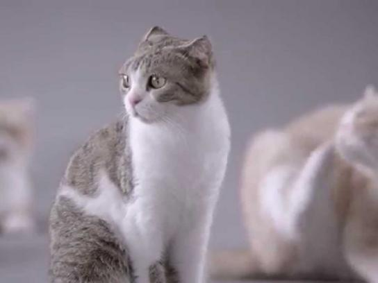 Kotex Film Ad -  Cats