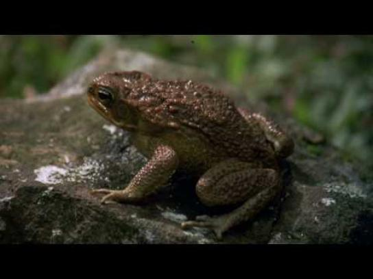 Top Digital Film Ad -  What sound can do, Frog