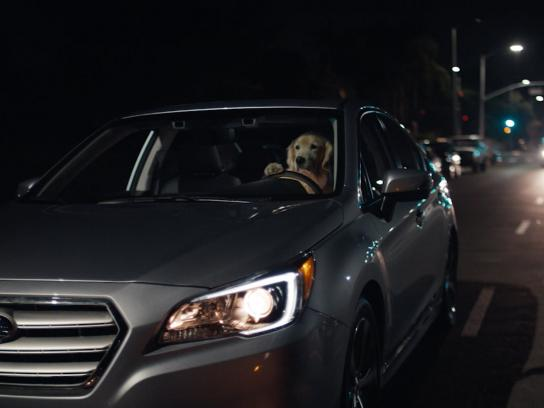 Subaru Film Ad -  Dog tested