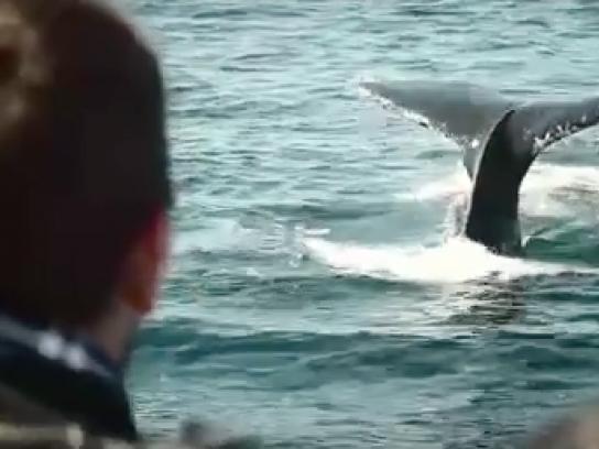 Boston Harbor Cruises Film Ad - Whale Watch