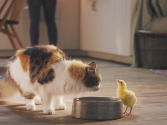 Dreamies Film Ad - Best Friends