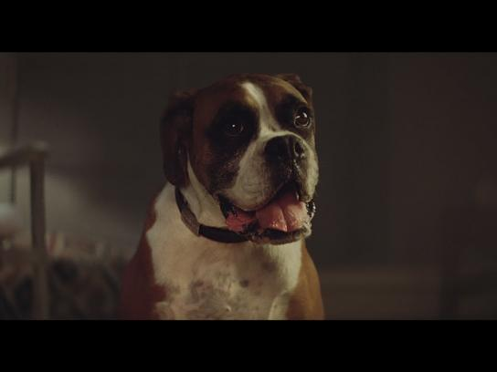 John Lewis Film Ad - Buster the boxer