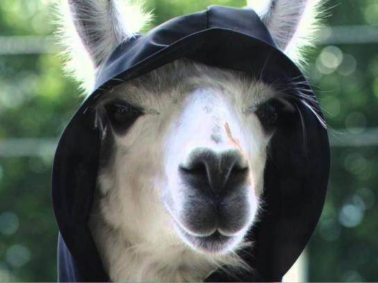 Ergon Energy Film Ad -  Grim Llama - Shocks & Tingles