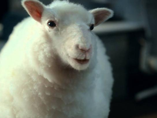 TD Ameritrade Film Ad -  Lamb