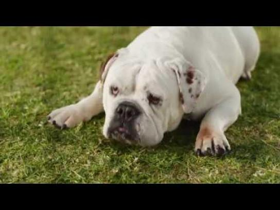 Coldwell Banker Film Ad - Old Dog, New Dog