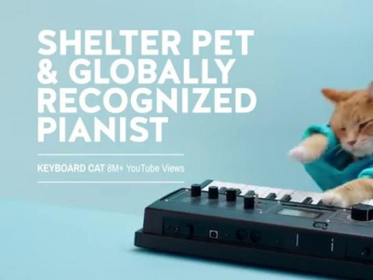 Humane Society of United States Film Ad -  Keyboard Cat