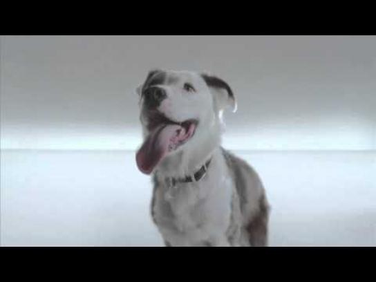 The Shelter Pet Project Film Ad -  Jules