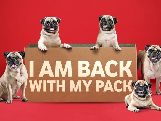 Vodafone Film Ad - The pug is back with it's pack