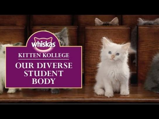 Whiskas Digital Ad -  Kitten College - Our diverse student body