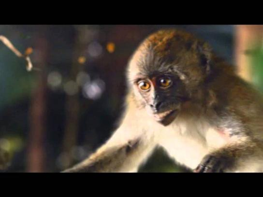 Hotels.com Film Ad -  Monkey