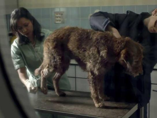 Pedigree Film Ad -  Bad Dog, Good Dog