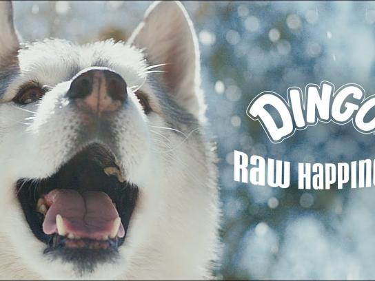 Dingo Rawhides Film Ad - Raw Happiness Films, Snow